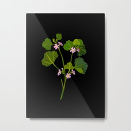 Mary Delany Botanical Vintage Floral Collage Malva Parviflora Metal Print