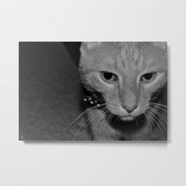 A Dapper Fella Metal Print