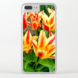 Orange Yellow Tulpis,Spring Flowers Clear iPhone Case