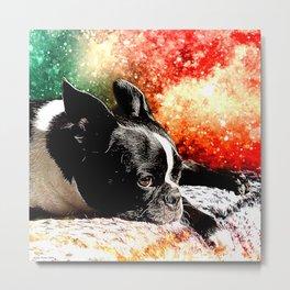 Boston Terrier (Jake) Metal Print