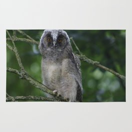 Young long-eared owl Rug