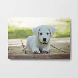 Adorable white puppy Metal Print