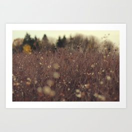 Fields + Fields  Art Print