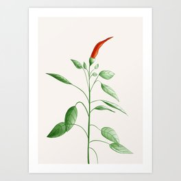 Little Hot Chili Pepper Plant Art Print