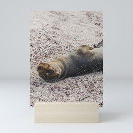 Adorable baby sea lion seal smiling up Mini Art Print
