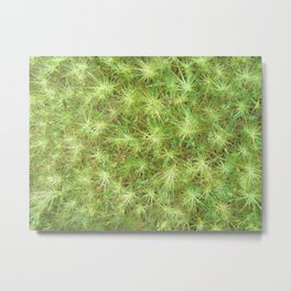 Young, green plants (grass) growing outdoor Metal Print
