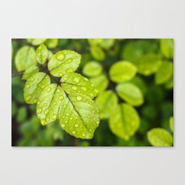 Plant Patterns - Green Scene Canvas Print