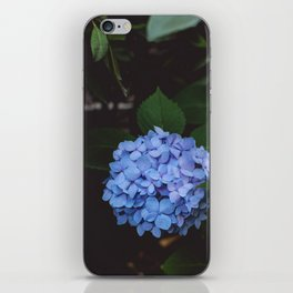 Blue Hydrangeas iPhone Skin