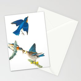 Blue Bird John James Audubon Vintage Scientific Bird Illustration Stationery Cards