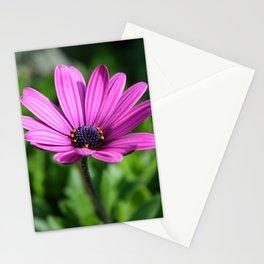 Cape Daisy Stationery Cards