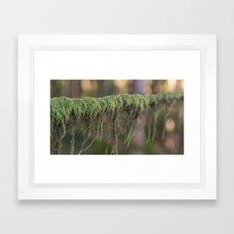 Moss on a branch Framed Art Print