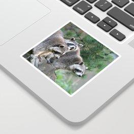 Raccoon_001_by_JAMFoto Sticker