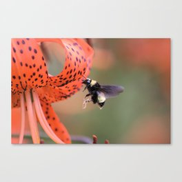 Tiger And The Bee Canvas Print