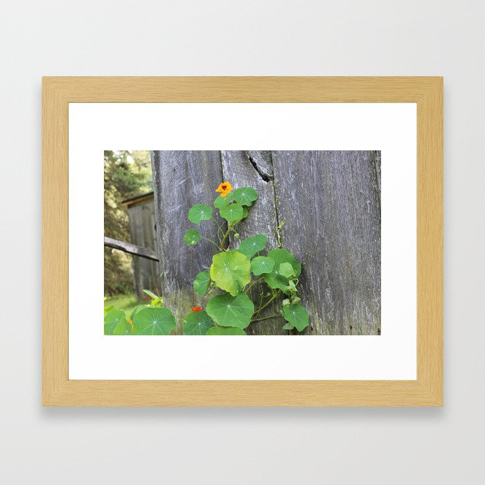 The Garden Wall Framed Art Print