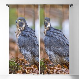 Peregrine Falcon Blackout Curtain
