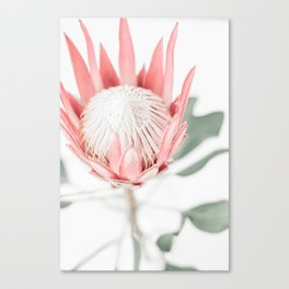 King Protea III Canvas Print