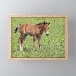 Little Colt Framed Mini Art Print