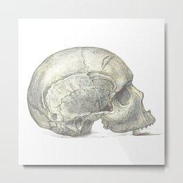 Skull 4 Metal Print