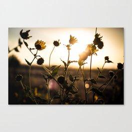 Summer Evening Canvas Print