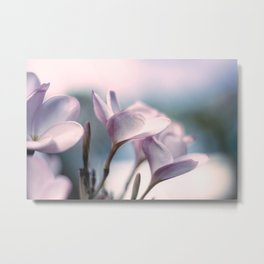 Plumeria Flower Metal Print