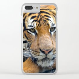 Relaxing Tiger Clear iPhone Case