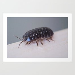 Potato Bug Art Print