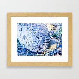 Seal pup Framed Art Print