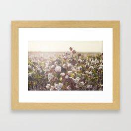 Cottonfield Framed Art Print