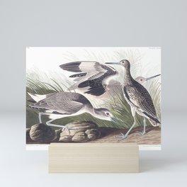 Semipalmated Snipe, or Willet by John Audubon Mini Art Print