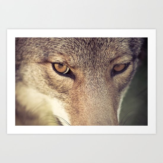 In the eyes of the Coyote Art Print