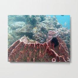 Barrel Sponge Metal Print