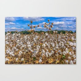 Sea of Cotton Canvas Print