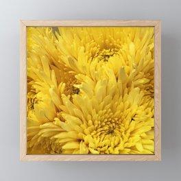 Bright Yellow Sunshine Mums Fluffy Floral Photo Framed Mini Art Print