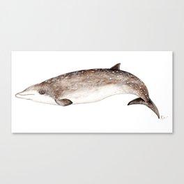 Beaked whale Canvas Print