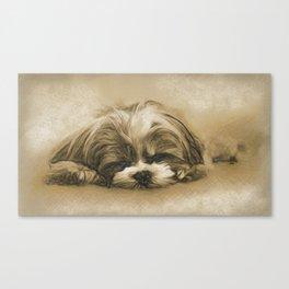 Sweet Dreams - Shih Tzu Puppy Sleeping Canvas Print