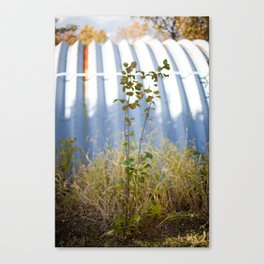 HOME: EARLY OCTOBER, ONE  Canvas Print