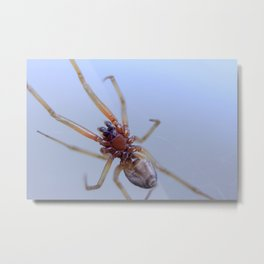 It showed me its belly! Does this mean we're friends?!  Metal Print
