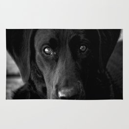 Loyalty  Black Lab  Rug