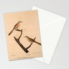 Cricket Longtail malurus graculus (L)1 Stationery Cards