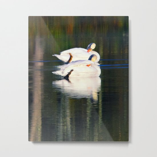 A swans gliding on a lake  Metal Print