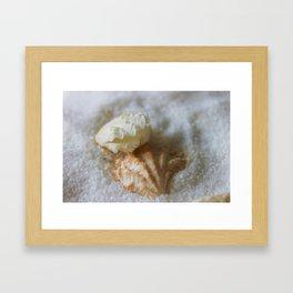 Seashells 1 Framed Art Print