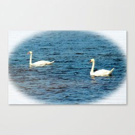 Two Mute Swans Canvas Print