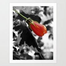 Hibiscus Bud Art Print