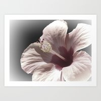 hibiscus Art Prints featuring Hibiscus by Lynn Bolt