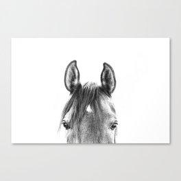 peekaboo horse, bw horse print, horse photo, equestrian print, equestrian photo, equestrian decor Canvas Print
