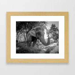 Elephant, Laos, Julie Gatto Framed Art Print