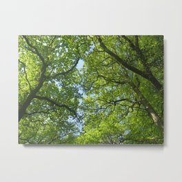 New Forest Beech Canopy Metal Print