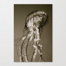 Jellyfish B&W Canvas Print