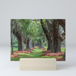 Avenue of Oaks Over Grass Mini Art Print