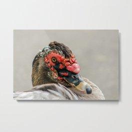 Muscovy duck portrait photo Metal Print